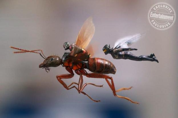 antman and the wasp 1